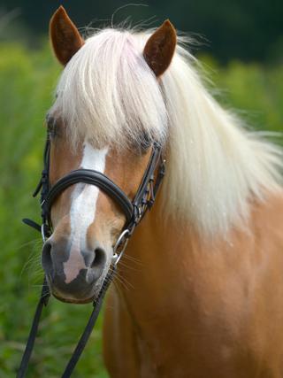 Portrait von Pony Inka